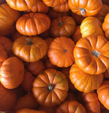 Pumpkin Patches In Charlotte Nc by Best Places To Pick Your Own Pumpkins In 2016