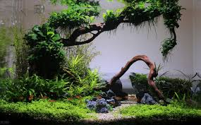 Planted Tank Coisia Vallem By Lauris Karpovs - Aquarium Design ... My Life Story Aquascape Gallery Aquascapes Pinterest Aquascaping Live 2016 Small Planted Tanks The Surreal Submarine World Of Amuse Category Archives Professional Tank Enchanted Forest By Tommy Vestlie Aquarium Design Contest Awards 100 Ideas Aquariums Fish Tanks And Vivarium Avatar Fish Tank Google Search Design Aquascape Ada Aquascaping Contest Homedesignpicturewin Award Wning Amenagementlegocom Legendary Aquarist Takashi Amano Architecture