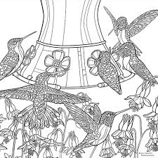 Coloring Book Backyard Birds and Blossoms