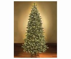 Fraser Fir Christmas Trees Uk by Fraser Fir Christmas Tree Cost Best Images Collections Hd For