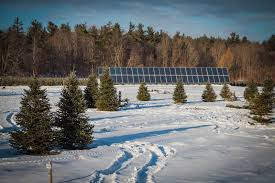 Guide To HarvestYourOwn Christmas Tree Farms In Ontario