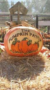 Pumpkin Patches Near Bakersfield Ca by California State University Bakersfield Student Housing