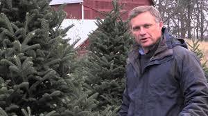 Tannenbaum Christmas Tree Farm Michigan by Consumer Resources Nursery U0026 Christmas Trees Msu Extension