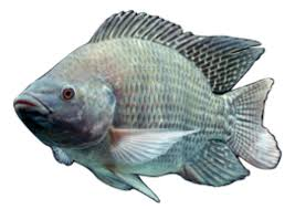 SUGAR CREEK FISHERY LLC