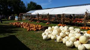 Pumpkin Picking Nj Near Staten Island by These 10 Pumpkin Patches In New York Are Perfect For A Fall Day