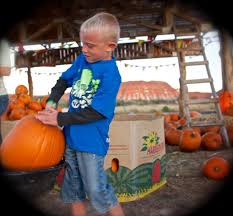 Hurricane Utah Pumpkin Patch by Staheli Family Farms U0027 Autumn Attractions Draw Thousands With Its