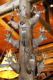 Christmas Tree Shop Foxboro Ma by 75 Best Sporting Goods Stores Images On Pinterest Bass Pro Shop
