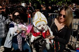 Tompkins Square Park Halloween Dog Parade 2015 by Here Are The Best Costumes From This Year U0027s Halloween Dog Parade