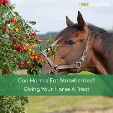 Can Horses Eat Strawberries? Giving Your Horse A Treat (Dec, 2017) Tennessee Weather Sleipnir Morgan Horse Farm Blog Build Compost Pile And Spread Manure Little Backyard World In My Life Of Lisa Laporte Electric Tape Fence Home Gardens Geek Becca Gem Backyard Horse Jumping Youtube Free Images Fence Animal Wall Shed Paint What Exactly Is A Roan Expert Advice On Care Order Blind Lonely Getting Older California Finds New Friend Sculpture Patricia Borum Cqright Otographs The Assembled 14 Camp Expo Pics Catskill Arabian Horses Texas Ranch Sullivan