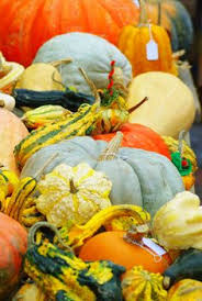 Portland Maine Pumpkin Patch by Frey Farms Autumn Couleur Best Heirloom Squash And Pumpkin Mix I