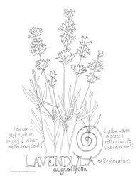 Lavender Coloring Page