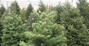 Balsam Christmas Tree Care by Fresh Cut Christmas Trees Minneapolis St Paul Wagners Greenhouses