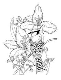 Southern Blooms Coloring Book