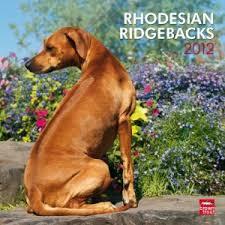 Do Rhodesian Ridgebacks Drool by Rhodesian Ridgebacks U2013 Janet Carr