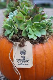 Larkspur Pumpkin Patch by Rooted In Thyme Fall Garden U0026 Succulent Pumpkin Centerpieces And
