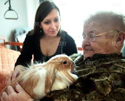 maison de retraite metz région lorraine des chats des poules et des lapins à la maison