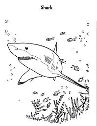 Great White Shark Is Hunting For The Prey Coloring Page Kids