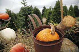 South Boulder Pumpkin Patch by Halloween Fun Guide 2017 Your Guide To Haunted Houses And Pumpkin