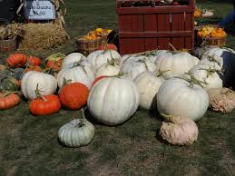 Pumpkin Farm Illinois Best by Dollinger Pumpkin Farm Illinois Haunted Houses
