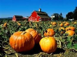 Pumpkin Patches Near Chico California by 30 Best Santa Paula Images On Pinterest Artists Beverage And