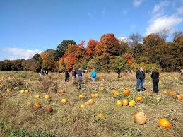 Kingsway Pumpkin Farm Hours by 28 Northeast Ohio Corn Mazes And Pumpkin Patches To Put You In The