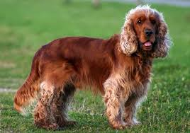 top 10 long short haired medium sized dogs