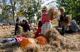 Nicasio Pumpkin Patch Marin by Pumpkins Pies And Produce Harvest Festivals In The Bay Area