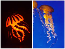 Shark Pumpkin Pattern Free by Jellyfish Pumpkin Takes Grand Prize In Vims Carving Contest