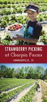 Farmers Shed Lexington Sc by 1272 Best South Carolina Images On Pinterest South Carolina