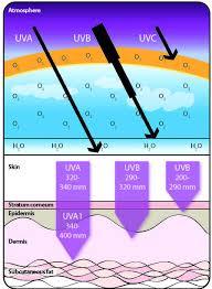 uvb narrowband l vitamin d 100 images overview uv and vitamin