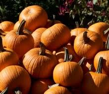 Best Pumpkin Patch Lancaster Pa by Best Fall Corn Mazes Near Philly For Hayrides Pumpkins And More