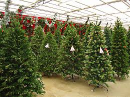 Christmas Trees Types Best by Christmas Trees