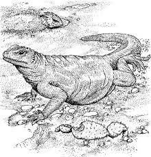 Komodo Dragon Full Stomach Coloring Pages