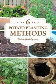 6 Ways To Grow Potatoes | Planting, Backyard And Plants Texas Garden The Fervent Gardener How Many Potatoes Per Plant Having A Good Harvest Dec 2017 To Grow Your Own Backyard 17 Best Images About Big Green Egg On Pinterest Pork Grilled Red Party Tuned Up Want Organic In Just 35 Vegan Mashed Potatoes Triple Mash Mashed Pumpkin Cinnamon Bacon Sweet Gardening Seminole Pumpkins And Sweet From My Backyard Potato Salad Recipe Taste Of Home