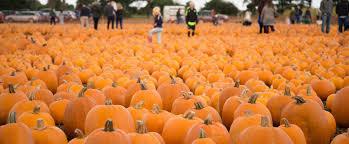 Largest Pumpkin Ever by Undley Farm Events Undley Farm Events