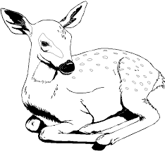 Printable 35 Wild Animal Coloring Pages 3598