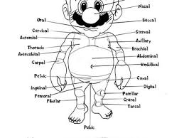 Doctor Mario039s Anatomy Coloring Book Page 2 By AmbrosiaNBurbank On DeviantArt