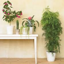 Martha Stewart Pre Lit Christmas Tree Problems by Houseplants Martha Stewart