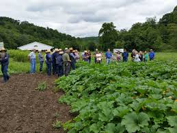 Southwest Ohio Pumpkin Patches by July 2017 Vegnet Newsletter