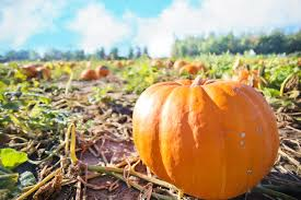 Colorado Pumpkin Patch by Explore A Pumpkin Patch This Fall Live Smart Colorado