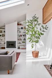 zimmerbaum in weißem wohnzimmer mit bild kaufen