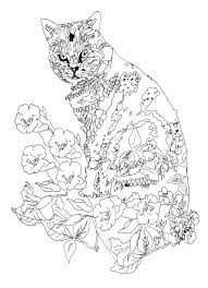 Lost Garden Pippa Rossi Cat About Orangerie An Interview With Color Book
