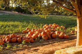 Schnepf Farms Halloween 2017 by October At Schnepf Farm Sarah Lorimer Photography
