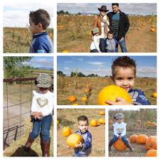 Mccalls Pumpkin Patch Haunted House by Mccall Pumpkin Patch 110 Photos U0026 37 Reviews Pumpkin Patches