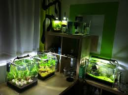 Aqua-Ecke #planted Tank #aquascaping #biconeo | Fish Room ... The Green Machine Aquascaping Shop Aquarium Plants Supplies Photo Collection Aquascape 219 Wallpaper F Amp 252r Of The Month October 2009 Little Hill Wallpapers Aquarium Beautify Your Home With Unique Designs Design Layout New Suitable Plants Aquariums Pinterest Pics Truly Inspired Kinds Ornamental Aquascaping Martino Agostini Timelapse Larbre En Mousse Hd Youtube Beauty Of Inside Water Garden Inspirationseekcom Grass Flowers Beautiful Background