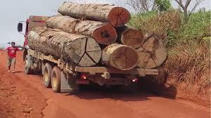 These Huge Hard Wood Logging Trucks Are The Hardest Hugest Log ...