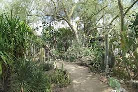 Moorten Botanical Garden Palm Springs Attractions Review 10Best