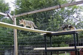 cats on deck cat enclosures outdoor cat runs many cat enclosure pictures