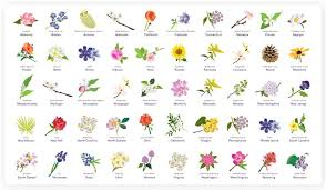 Wedding Bouquet Meaning How To Choose Your Flowers Style