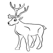 Reindeer Coloring Page A Pages St